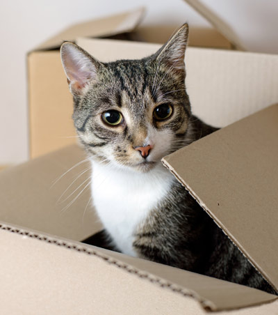 cat in moving box as owner is not buying a condo