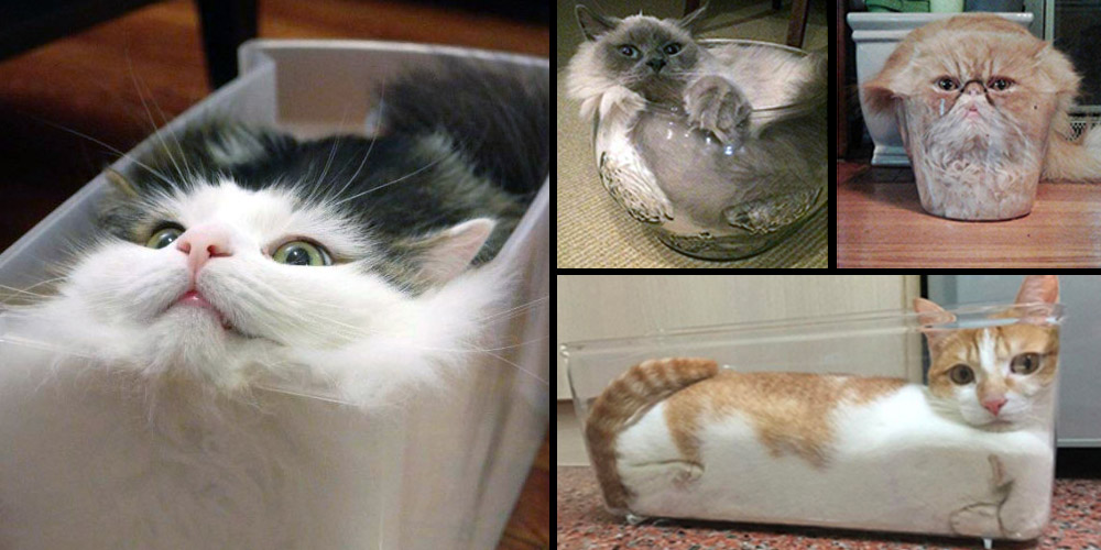 Cats are they considered solid or liquid?